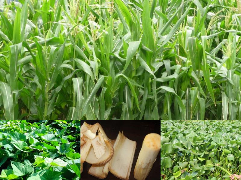 nguyên liệu cho máy xay cỏ đa năng