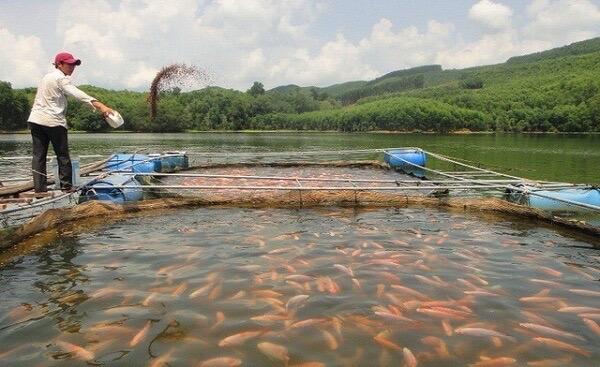 máy chế biến thức ăn cho cá